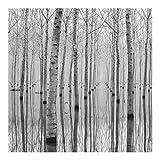 Fototapete Wald - Birken im November - Vlies Quadrat, Größe HxB: 192cm x 192cm