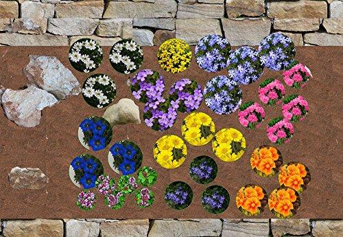 komplettes Pflanzenset 35 winterharte, blühende Steingarten Pflanzen - Steinbeet