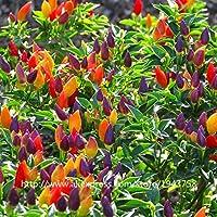 ScoutSeed Chili Peppers Semillas Multi Color Pimienta Ornamental Mini Planta De Jardín Vegetal