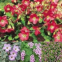 Portal Cool 10pcs: Nueva flor agradable adorable Semillas Semillas fragantes Blooms Al pulsar pasta de