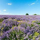Weleda Lavendel Entspannungsdusche, 1er Pack (1 x 200 ml) - 3