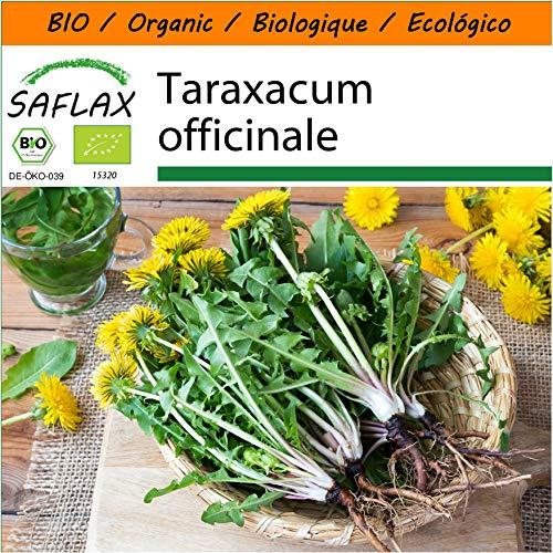 SAFLAX - Jardin dans le sac - BIO - Pissenlit - 400 graines - Avec substrat de culture dans un sac de levage facile à manipuler. - Taraxacum officinale