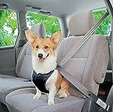 EnGive Hund Auto Sicherheitsgurt sicherheitsgeschirr Autogurt