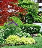 Pinkdose 100 Teile/beutel Bunte Schwingel Gras Bonsai Indoor Garten Festuca Mehrjährige Winterharte Zierpflanzen Einfach Wachsen Bonsai Sementes: 8