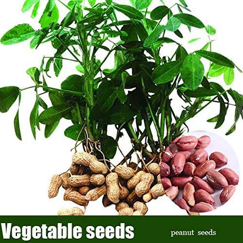 pinkdose 10 pc/sacchetto rosso di arachidi cina organic prelibato ortaggio bonsai da interno giardino vasi fioriere per la casa della decorazione del giardino facile da coltivare