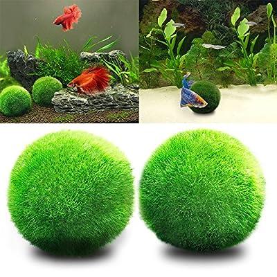 angju Aquarium Moss Balls - Aesthetically Beautiful Live Plant Moss Ball Eco-Friendly Fish Tank Ornament Shrimps Snails Love Low Maintenance Curbs Algae Growth