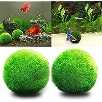 angju - Bolas de musgo para acuario, estéticamente hermosas, para plantas vivas, bola de musgo ecológica, adorno para pecera, camarones, caracoles, cortinas de bajo mantenimiento, crecimiento de algas