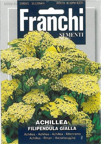 Franchi Achillea Firtipendula gialla