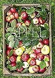 Äpfel: Rezepte aus dem Obstgarten