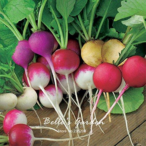 100pcs Petit arc-en-Radis Graines Oganic Couleurs multiples Radis jardin Plante en pot bricolage fruits Graines de légumes