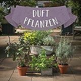 Duftpflanzen Set - Geh mit deiner Nase auf Reisen - 7 betörend riechende Pflanzen