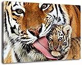 Tiger mit Tigerbaby Format:60x40 cm Bild auf Leinwand bespannt, riesige XXL Bilder komplett und fertig gerahmt mit Keilrahmen, Kunstdruck auf Wand Bild mit Rahmen, günstiger als Gemälde oder Bild, kein Poster oder Plakat