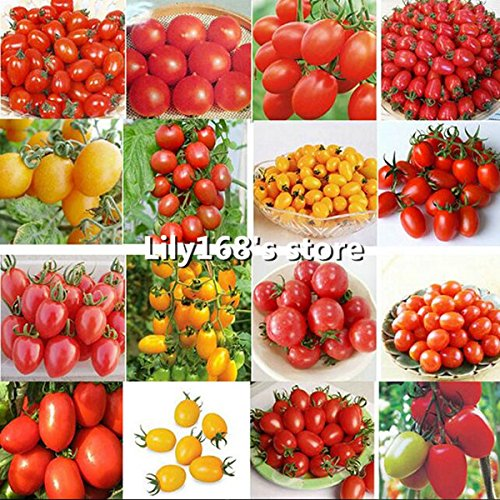 2016 Promotion New Outdoor Plants semences de tomates Jardin Mini pot Bonsai Balcon 100pcs Légumes de fruits de semences