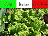 Fast 500 Schwarz Gesetzt Simpson Salatsamen Erbstück Non GMO Non Hybrid Growing
