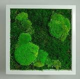 Moosbilder Wandgestaltung, Bild mit Moos und Bilderrahmen, Moosbild, Wandbild, Kugelmoos Moosplatte Pflanzenbilder Moosbilder versch. Maße günstig (25 x 25 cm weiss 50/50% Kugelmoos/Flachmoos)