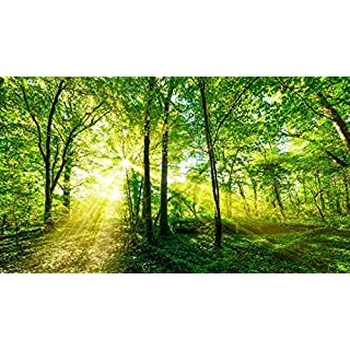 azutura Green Trees Wall Mural Forest Nature Photo Wallpaper Living Room Bedroom Decor available in 8 Sizes Large Digital
