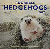 Adorable Hedgehogs 2017: 16-Month Calendar September 2016 through December 2017 (Calendars 2017)