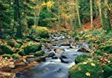1art1 40547 Wälder - Waldfluss 8-teilig, Fototapete Poster-Tapete (368 x 254 cm)