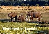 Elefanten in Sambia (Wandkalender 2019 DIN A3 quer): Die Elefanten im South Luangwa National Park können aus nächster Nähe beobachtet und fotografiert ... (Monatskalender, 14 Seiten ) (CALVENDO Tiere) - Johanna Krause
