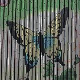 Frank Flechtwaren Bambus-Vorhang Butterfly