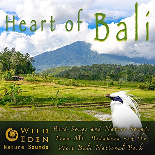 Morning Birds At Dalem Rainforest Temple [Exotic Bird Sounds] - Morning Song Wild Bird