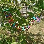 Bello Luna Rainbow Parrot Ladder Flexible Wooden Swing Toys for Bird 12