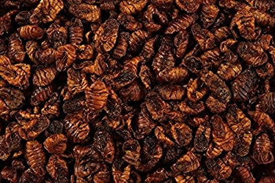 100g Premium Natural Dried Silkworm Pupae Terrapin, Reptile Food, Turtle, Koi Pond Fish Food by GLX