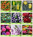 Pinkdose Blumensamen: Garten Samen Pflanzen Combo Gaillardia, Lupine-Pixie Delight Zwerg, Burz-Gelb, Kapuzinerkresse, Petunia-Star, Sweet Willium-,