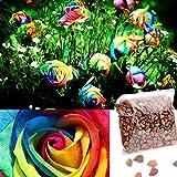 Ncient 1 Bolsa de 500 Semillas de Rosa Colorida Jardín Semillas de Flores Plantas para Interior y Exteriores