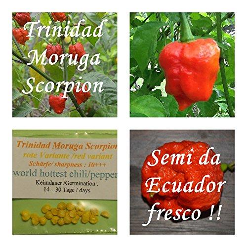 Galleria fotografica Trinidad Moruga Scorpion -20 semi / variante rosso - più caldo peperoncino in tutto il mondo !!! + 5-8 semi di una varietà di peperoncino - !!!