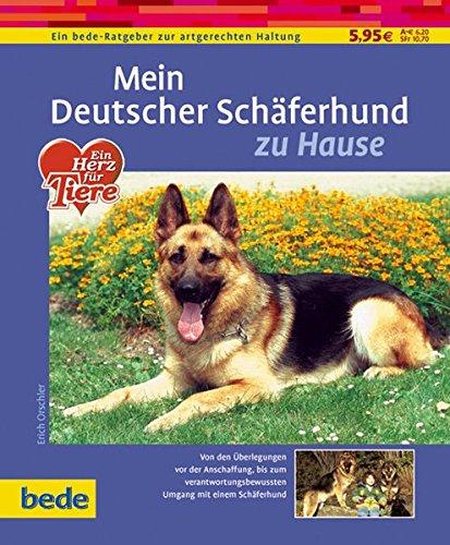 Deutscher Schäferhund, zu Hause (Schäferhund Rassen Deutscher)