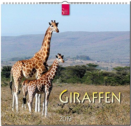 Giraffen 2019: Mittelformat-Kalender