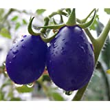 Qulista Samenhaus - 20pcs Selten Bio Schwarz Veredelte Pflaumen-Tomate Samen Cherrytomate Obstsamen mehrjährig winterhart, geeignet für Balkon, Terrasse & Garten
