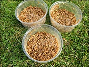 MINI MEALWORMS - 3 X 40g TUBS - LIVE BIRD FOOD