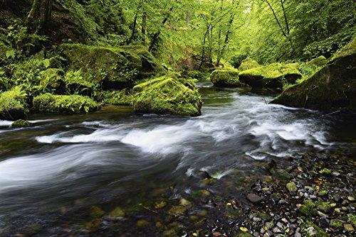 Artland Qualitätsbilder I Bild auf Leinwand Leinwandbilder Wandbilder 60 x 40 cm Landschaften Wald Foto Grün B9ZX Böhmische Schweiz