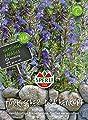 Sperli Türkischer Drachenkopf von Sperli auf Du und dein Garten