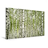 Calvendo Premium Textil-Leinwand 120 cm x 80 cm Quer, Dichter Birken-Wald in der russischen Tundra | Wandbild, Bild auf Keilrahmen, Fertigbild auf Echter die Birken im Wind Wiegen Orte Orte