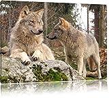 Pixxprint Wölfe im Wald, Format: 120x80 auf Leinwand, XXL riesige Bilder fertig gerahmt mit Keilrahmen, Kunstdruck auf Wandbild mit Rahmen, günstiger als Gemälde oder Ölbild, kein Poster oder Plakat