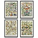 De Cuisine vintage Impressions Lot de 4(1)-Champignon Champignon Poster-Art-Fruits Poster-Fruits de cuisine Art-Art-Science botanique-Larousse-Vp1033 8 x 10 in