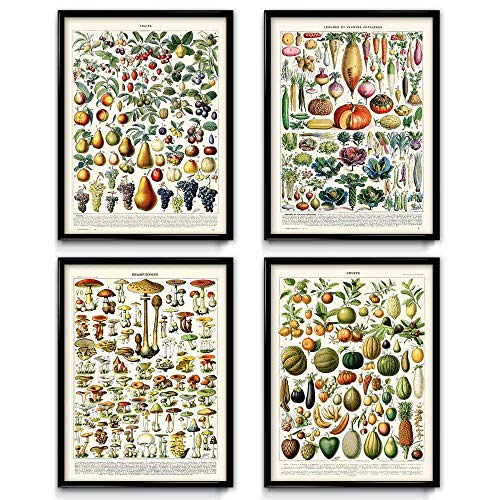 Küche Vintage Prints Set von 4(1)-Mushroom-Pilz Poster Art-Früchte, Poster-Kunst-Küche Kunst-Botanical Wissenschaft-Larousse-vp1033 50 x 70 cm