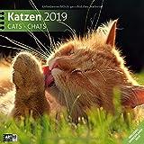 Katzen 2019, Wandkalender / Broschürenkalender im Hochformat (aufgeklappt 30x60 cm) - Geschenk-Kalender mit Monatskalendarium zum Eintragen