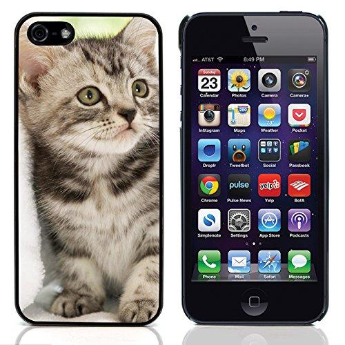 Graphic4You Baby Cats Love Tier Design Harte Hülle Case Tasche Schutzhülle für Apple iPhone 5 und 5S Design #2