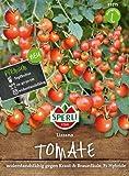 Cherry Tomate Lizzano F1