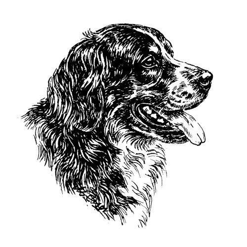 Schecker-Autoaufkleber Hundeaufkleber ideal für helle Autos Berner Sennenhund -