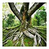 Vliestapete–Alter Baum–Wandbild quadratisch