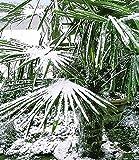 BALDUR-Garten Winterharte... Ansicht