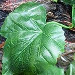 MagiDeal Reptile Vivarium Decoration Aquarium Ornament Artificial Grapes Ivy Vines 61gn7 OhgAL