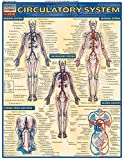 Circulatory System (Quickstudy: Academic)