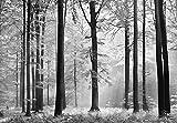 Mantiburi Papier peint photo Forêt–(115I) Taille 366x 254cm 8pièces Noir/blanc–Forêt arbres soleil paysage nature Papier peint Motif peint poster image de Salon Chambre Cuisine Wall Mural