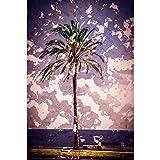 Pitaara Box Palm Trees Along The Coast I...